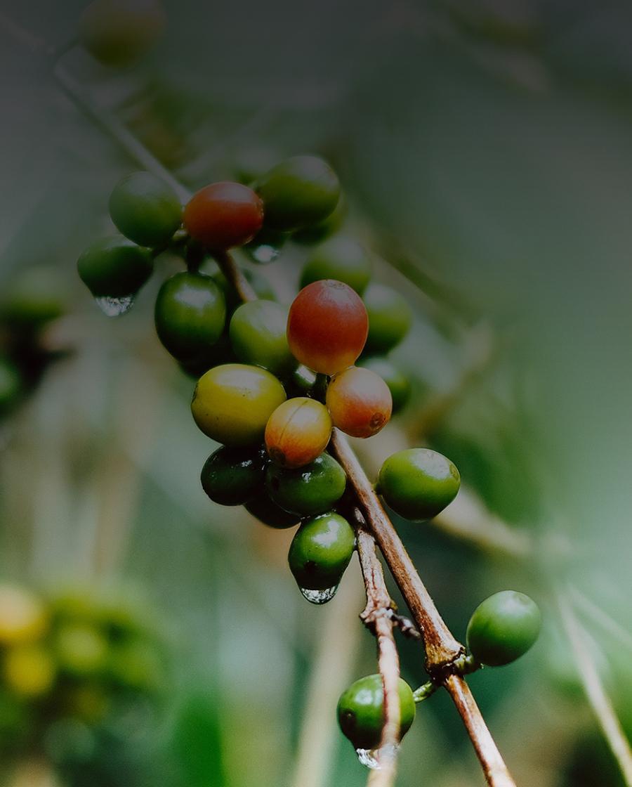 Rainforest Alliance gecertificeerde koffie van Gio Coffee