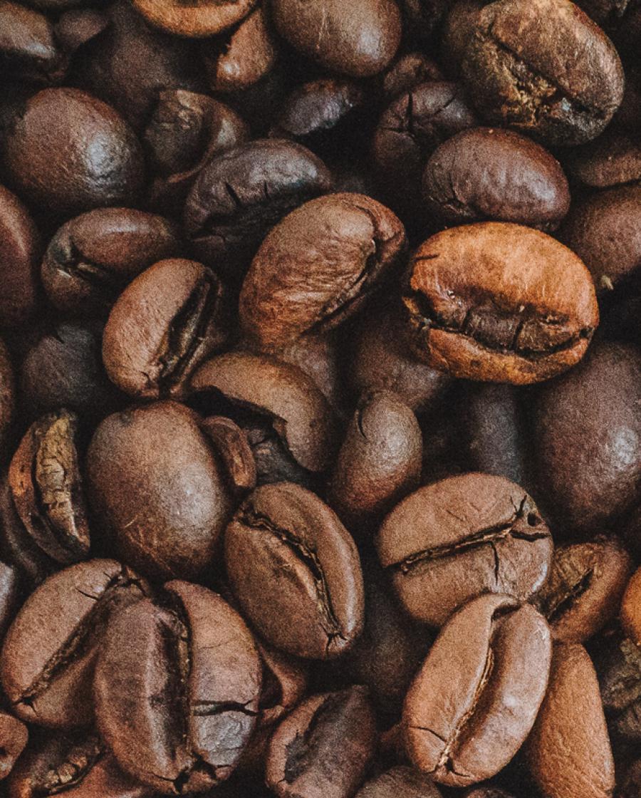 Van plantage tot koffiekopje Gio Coffee