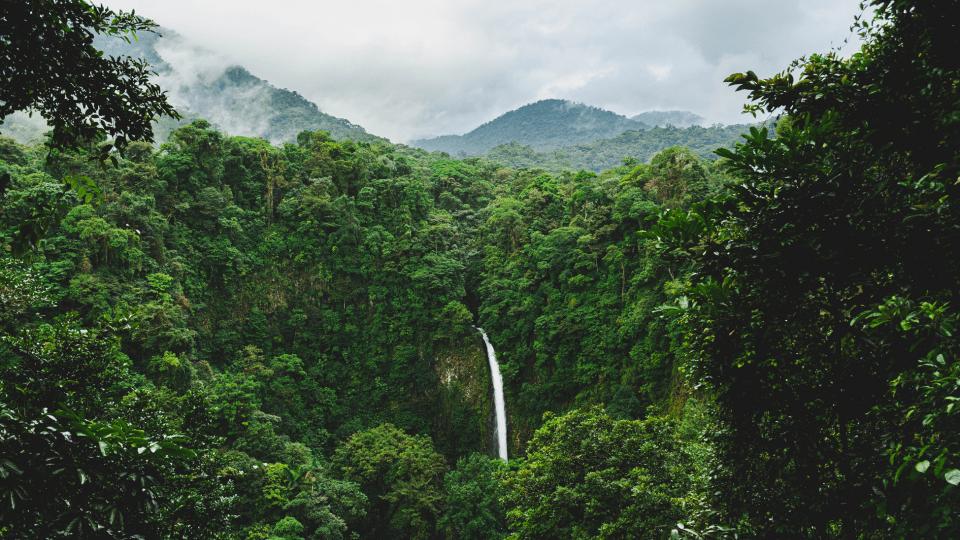 Gio Coffee Rainforest Alliance gecertificeerd