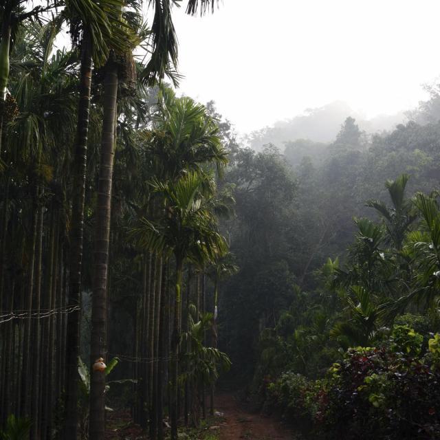 Tropisch regenwoud voor koffiebonen